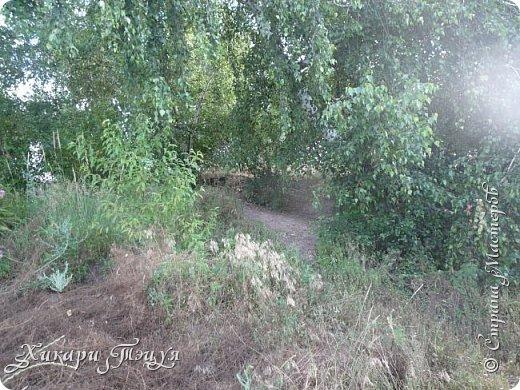 """За сегодня это мой второй блог... Итак, на часах ровно шесть утра... Я проснулась намного раньше, где-то в половине пятого, но до шести рисовала на улице, специально ждала, когда солнце взойдет немного повыше.  Я живу на Донбассе, в городе Макеевке, в Ханжонково, в поселке Фурманово...  Как известно, в Донецкой области очень много шахт, а посему и терриконов. У нас большого террикона нет, зато есть небольшие холмы. Они состоят из тех же камней, что и терриконы, только по размерам намного меньше. Самая большая высота над уровнем земли - не больше 4 метров. Мы зовем это - бугор. Да, так и зовем))) Например: """"Не ходи на бугор"""", """" Пошли на бугор"""" и т.д. На бугре очень много берез. Из них есть моя любимая))) На ней очень удобно лазить... фото 10"""