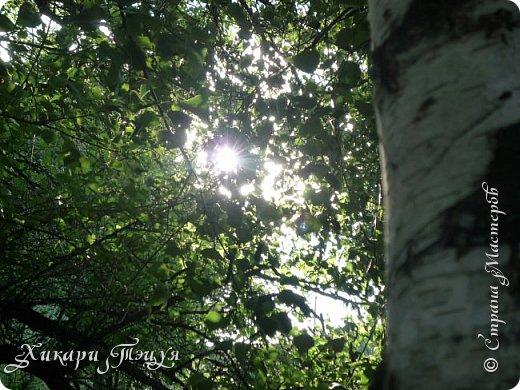 """За сегодня это мой второй блог... Итак, на часах ровно шесть утра... Я проснулась намного раньше, где-то в половине пятого, но до шести рисовала на улице, специально ждала, когда солнце взойдет немного повыше.  Я живу на Донбассе, в городе Макеевке, в Ханжонково, в поселке Фурманово...  Как известно, в Донецкой области очень много шахт, а посему и терриконов. У нас большого террикона нет, зато есть небольшие холмы. Они состоят из тех же камней, что и терриконы, только по размерам намного меньше. Самая большая высота над уровнем земли - не больше 4 метров. Мы зовем это - бугор. Да, так и зовем))) Например: """"Не ходи на бугор"""", """" Пошли на бугор"""" и т.д. На бугре очень много берез. Из них есть моя любимая))) На ней очень удобно лазить... фото 13"""