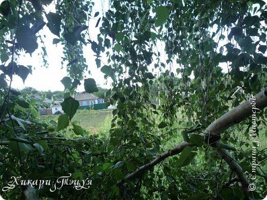 """За сегодня это мой второй блог... Итак, на часах ровно шесть утра... Я проснулась намного раньше, где-то в половине пятого, но до шести рисовала на улице, специально ждала, когда солнце взойдет немного повыше.  Я живу на Донбассе, в городе Макеевке, в Ханжонково, в поселке Фурманово...  Как известно, в Донецкой области очень много шахт, а посему и терриконов. У нас большого террикона нет, зато есть небольшие холмы. Они состоят из тех же камней, что и терриконы, только по размерам намного меньше. Самая большая высота над уровнем земли - не больше 4 метров. Мы зовем это - бугор. Да, так и зовем))) Например: """"Не ходи на бугор"""", """" Пошли на бугор"""" и т.д. На бугре очень много берез. Из них есть моя любимая))) На ней очень удобно лазить... фото 17"""