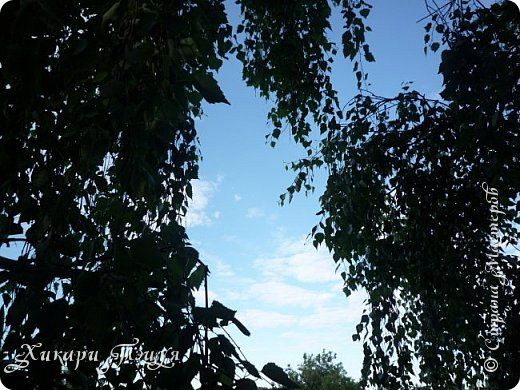 """За сегодня это мой второй блог... Итак, на часах ровно шесть утра... Я проснулась намного раньше, где-то в половине пятого, но до шести рисовала на улице, специально ждала, когда солнце взойдет немного повыше.  Я живу на Донбассе, в городе Макеевке, в Ханжонково, в поселке Фурманово...  Как известно, в Донецкой области очень много шахт, а посему и терриконов. У нас большого террикона нет, зато есть небольшие холмы. Они состоят из тех же камней, что и терриконы, только по размерам намного меньше. Самая большая высота над уровнем земли - не больше 4 метров. Мы зовем это - бугор. Да, так и зовем))) Например: """"Не ходи на бугор"""", """" Пошли на бугор"""" и т.д. На бугре очень много берез. Из них есть моя любимая))) На ней очень удобно лазить... фото 19"""