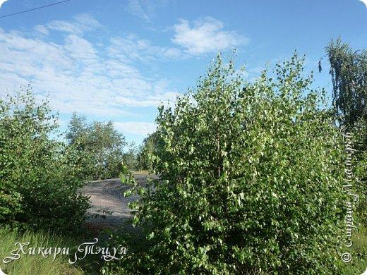 """За сегодня это мой второй блог... Итак, на часах ровно шесть утра... Я проснулась намного раньше, где-то в половине пятого, но до шести рисовала на улице, специально ждала, когда солнце взойдет немного повыше.  Я живу на Донбассе, в городе Макеевке, в Ханжонково, в поселке Фурманово...  Как известно, в Донецкой области очень много шахт, а посему и терриконов. У нас большого террикона нет, зато есть небольшие холмы. Они состоят из тех же камней, что и терриконы, только по размерам намного меньше. Самая большая высота над уровнем земли - не больше 4 метров. Мы зовем это - бугор. Да, так и зовем))) Например: """"Не ходи на бугор"""", """" Пошли на бугор"""" и т.д. На бугре очень много берез. Из них есть моя любимая))) На ней очень удобно лазить... фото 25"""