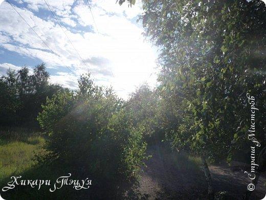 """За сегодня это мой второй блог... Итак, на часах ровно шесть утра... Я проснулась намного раньше, где-то в половине пятого, но до шести рисовала на улице, специально ждала, когда солнце взойдет немного повыше.  Я живу на Донбассе, в городе Макеевке, в Ханжонково, в поселке Фурманово...  Как известно, в Донецкой области очень много шахт, а посему и терриконов. У нас большого террикона нет, зато есть небольшие холмы. Они состоят из тех же камней, что и терриконы, только по размерам намного меньше. Самая большая высота над уровнем земли - не больше 4 метров. Мы зовем это - бугор. Да, так и зовем))) Например: """"Не ходи на бугор"""", """" Пошли на бугор"""" и т.д. На бугре очень много берез. Из них есть моя любимая))) На ней очень удобно лазить... фото 27"""