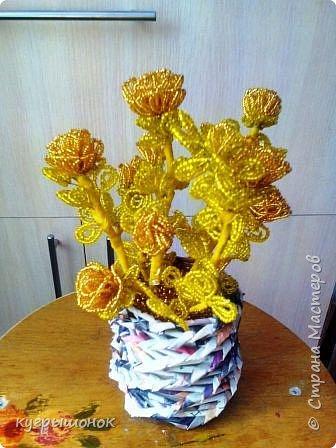 Результат наблюдений за цветущими растениями:) фото 1