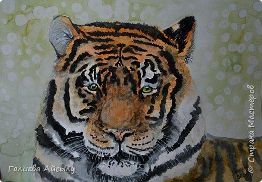 Доброго времени суток:) Представляю вашему вниманию моего акварельного тигра... С акварелькой у меня отношения совсем плохие,но я стараюсь,так сказать,постичь все необъятное и прелестное в ней)) фото 1