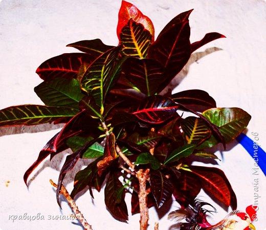 ДОБРЫЙ ДЕНЬ СТРАНА МАСТЕРОВ, лето , солнышко, тепло , все радуются приятному летнему отдыху , вот и я радуюсь своими комнатными растениями, в апреле я их почти все выношу на лоджию , на солнышко, чтобы дышали свежим воздухом и они мне отвечают своим цветением , решила поделиться с вами фото 10