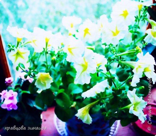 ДОБРЫЙ ДЕНЬ СТРАНА МАСТЕРОВ, лето , солнышко, тепло , все радуются приятному летнему отдыху , вот и я радуюсь своими комнатными растениями, в апреле я их почти все выношу на лоджию , на солнышко, чтобы дышали свежим воздухом и они мне отвечают своим цветением , решила поделиться с вами фото 7