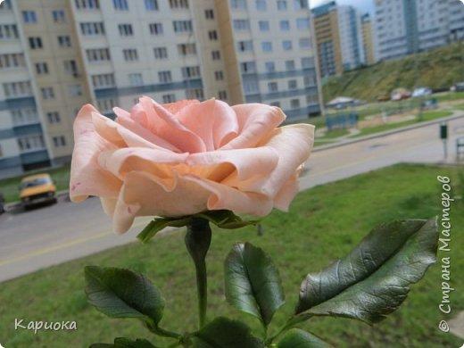 Доброго времени суток, СМ! Продолжаю осваивать хф и в частности розы. Сегодня хочу поделиться с Вами своей садовой розочкой. Вышла она не большая -  около 20 см (точно не измеряла).  фото 11