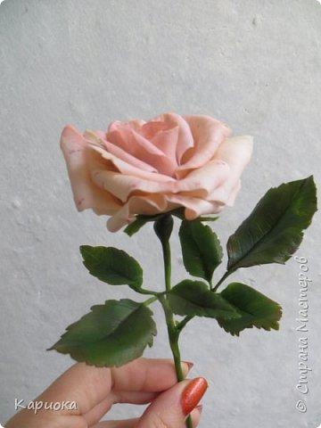 Доброго времени суток, СМ! Продолжаю осваивать хф и в частности розы. Сегодня хочу поделиться с Вами своей садовой розочкой. Вышла она не большая -  около 20 см (точно не измеряла).  фото 6