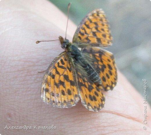 Ручная бабочка.  Опустилась отдохнуть на руку дочкиной подружке. фото 1