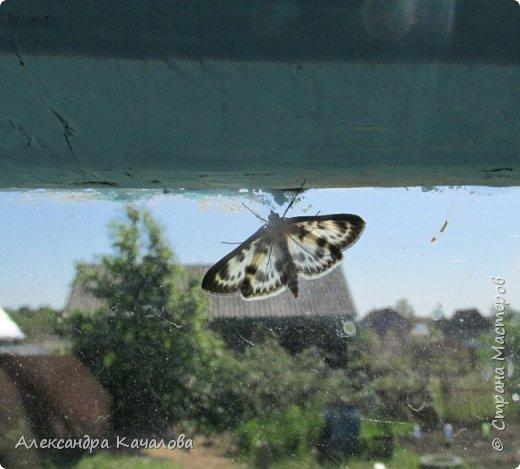 Ручная бабочка.  Опустилась отдохнуть на руку дочкиной подружке. фото 2