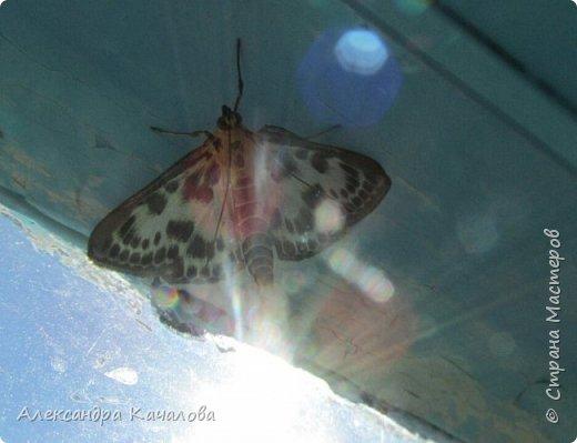Ручная бабочка.  Опустилась отдохнуть на руку дочкиной подружке. фото 3