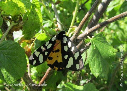 Ручная бабочка.  Опустилась отдохнуть на руку дочкиной подружке. фото 4