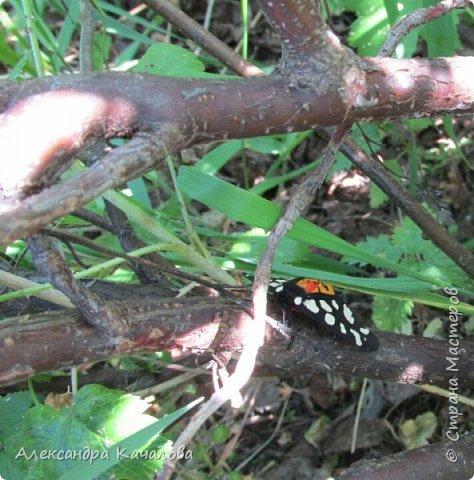 Ручная бабочка.  Опустилась отдохнуть на руку дочкиной подружке. фото 5