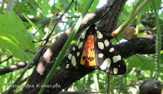 Ручная бабочка.  Опустилась отдохнуть на руку дочкиной подружке. фото 6