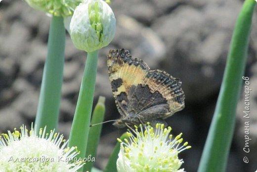 Ручная бабочка.  Опустилась отдохнуть на руку дочкиной подружке. фото 8