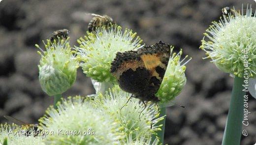 Ручная бабочка.  Опустилась отдохнуть на руку дочкиной подружке. фото 9