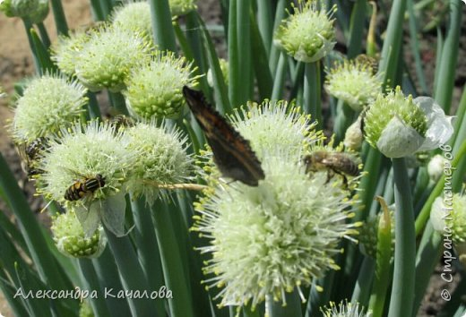 Ручная бабочка.  Опустилась отдохнуть на руку дочкиной подружке. фото 10