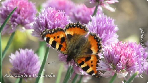 Ручная бабочка.  Опустилась отдохнуть на руку дочкиной подружке. фото 13
