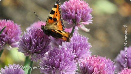 Ручная бабочка.  Опустилась отдохнуть на руку дочкиной подружке. фото 12