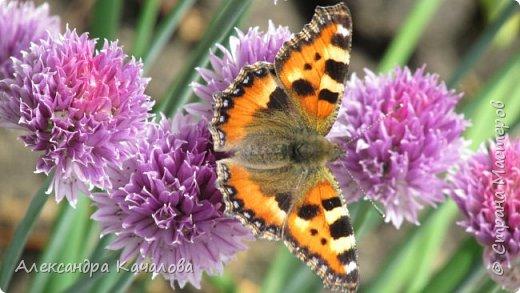 Ручная бабочка.  Опустилась отдохнуть на руку дочкиной подружке. фото 11