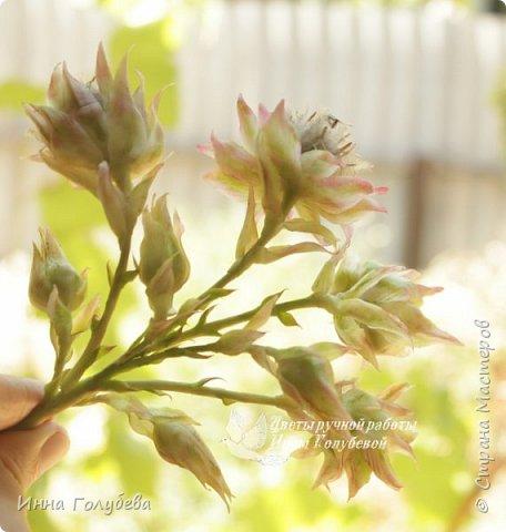 Девочки,сегодня я к вам с вот таким необычным,нежным цветочком. Серрурия) Лепила с живой веточки,в процессе покажу. Отсняла очень подробный мк,но жаль,что не могу разместить все фото,даже разбив на две части( Поэтому кое- что буду рассказывать,но основные фото будут) фото 28