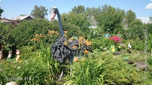 Вот такая интересная птичка поселилась в моем саду фото 2
