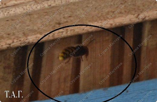 Нравится мне фотографировать окружающий мир. А особенно насекомых. На режиме макросъемки снимаю цветочки- мотылечки... фото 9