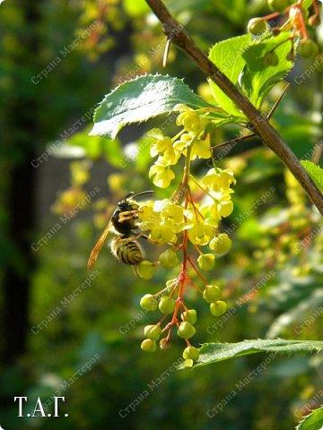 Нравится мне фотографировать окружающий мир. А особенно насекомых. На режиме макросъемки снимаю цветочки- мотылечки... фото 2