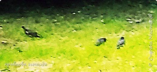 ДОБРЫЙ ДЕНЬ дорогие мастера и мастерицы , сегодня я к вам с фоторепортажем . Живу я по адресу: МОСКВА  ВАО. У нас летом , да и В любое время года  можно погулять , отдохнуть  не хуже , чем в парке, много зелени , два больших декоративных пруда, пройдя вдоль дома можно выйти на аллею. фото 21