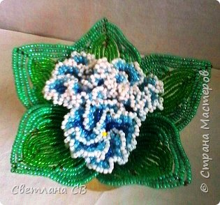 Фиалка махровая (голубая) фото 3