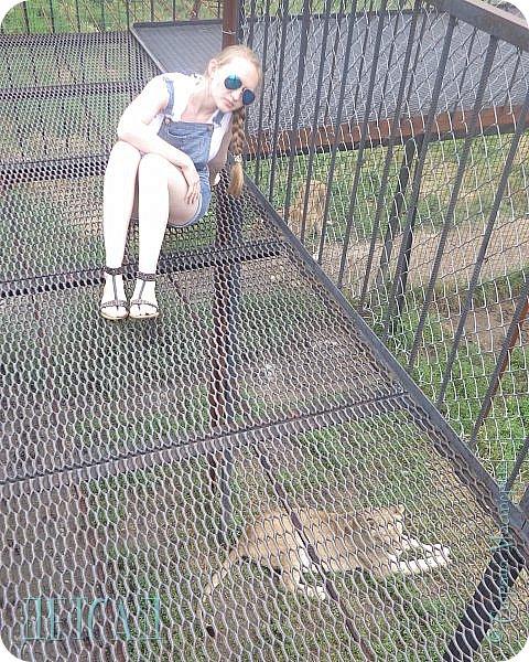 Экскурсия в парк львов ТАЙГАН фото 8