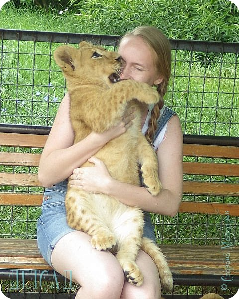 Экскурсия в парк львов ТАЙГАН фото 1