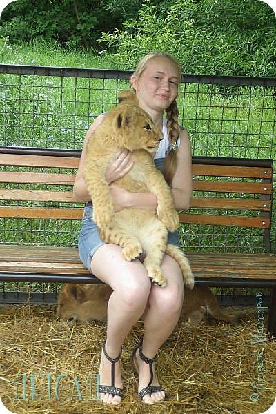 Экскурсия в парк львов ТАЙГАН фото 4