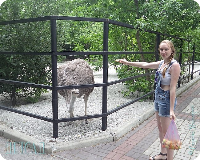 Экскурсия в парк львов ТАЙГАН фото 16