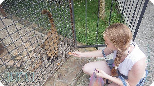 Экскурсия в парк львов ТАЙГАН фото 17