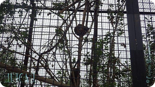 Экскурсия в парк львов ТАЙГАН фото 18