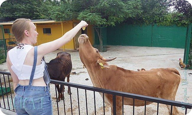 Экскурсия в парк львов ТАЙГАН фото 21