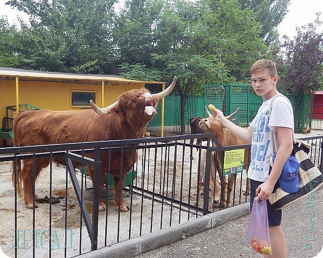 Экскурсия в парк львов ТАЙГАН фото 22