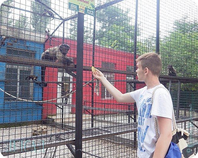 Экскурсия в парк львов ТАЙГАН фото 24