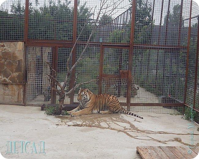 Экскурсия в парк львов ТАЙГАН фото 27