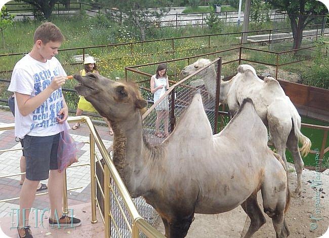 Экскурсия в парк львов ТАЙГАН фото 29