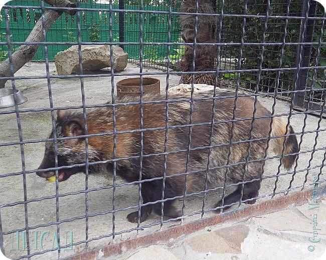 Экскурсия в парк львов ТАЙГАН фото 28
