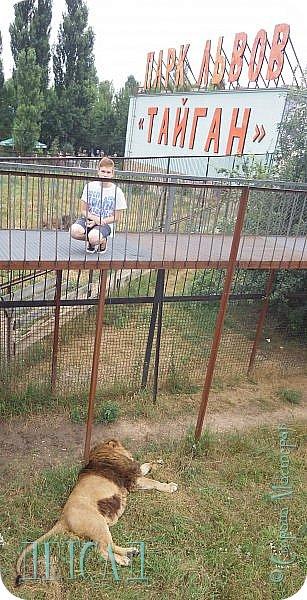 Экскурсия в парк львов ТАЙГАН фото 30