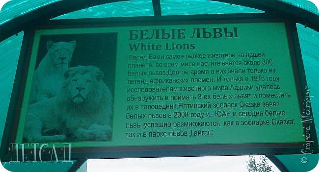 Экскурсия в парк львов ТАЙГАН фото 31