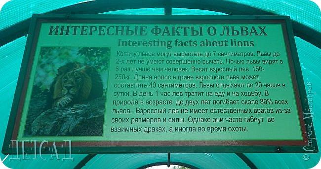Экскурсия в парк львов ТАЙГАН фото 33