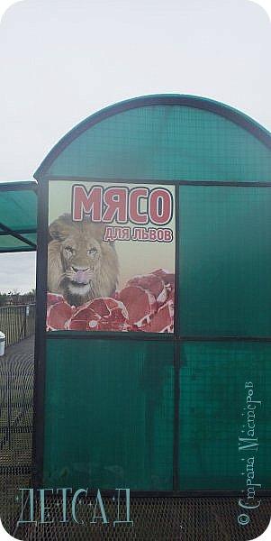 Экскурсия в парк львов ТАЙГАН фото 10