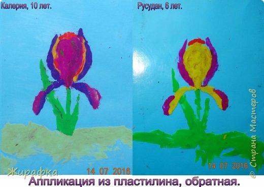 Ирисы. фото 1