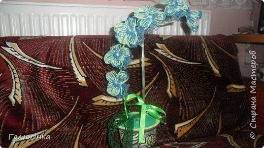 Ще одна моя орхідея фото 3