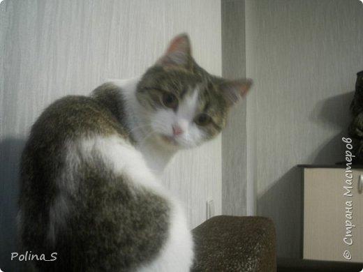Моя кошка фото 1