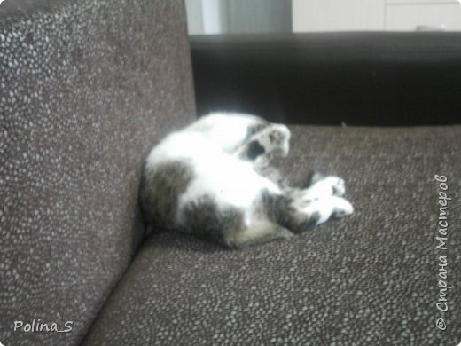Моя кошка фото 3